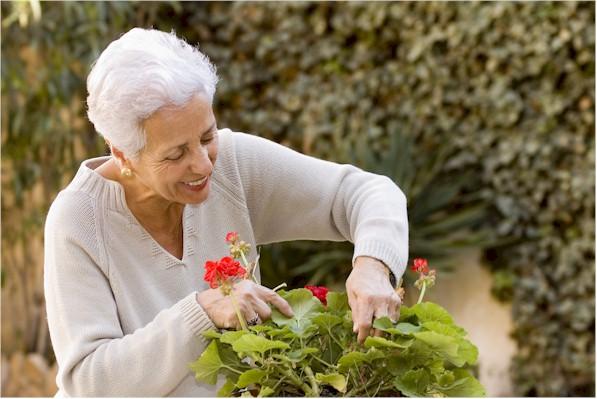 seniorlady-gardening